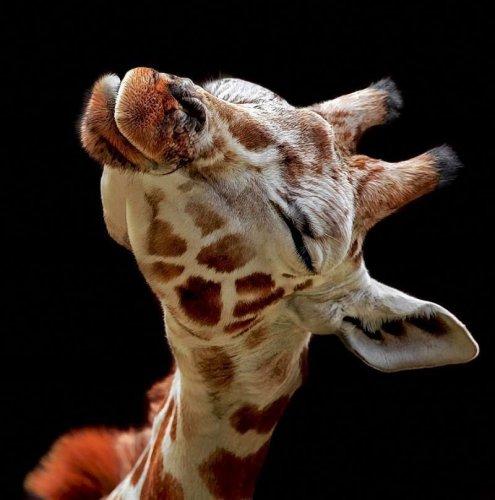 Смешные и забавные животные (57 фото)