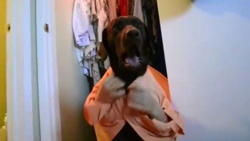 Студентка сняла мега-популярное видео о человеко-собачей жизни