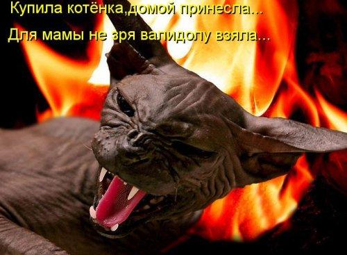 Весёлости из котоматрицы (30 фото)