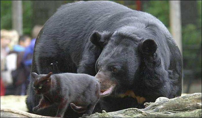 Медведь собирает грибы лису картинка поклонников