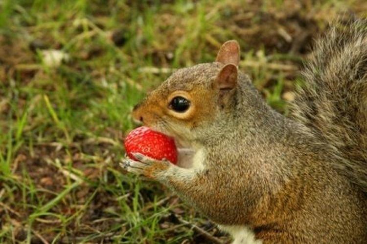 дикие животные поедающие плоды фото привела