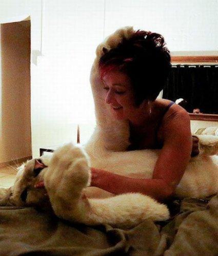 Белый лев – домашний питомец (7 фото)