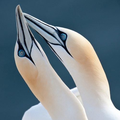 Птичья нежность (62 фото)