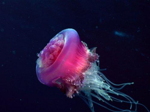 Интересные факты о медузах (16 фото)