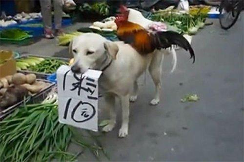 """Собака """"устроилась"""" продавцом кур на рынке в Китае"""