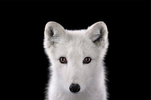 Портреты животных (68 фото)