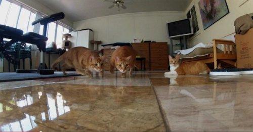 Кошки против лазера