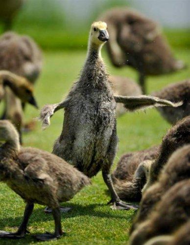 Позитив: Забавные птицы (23 фото)