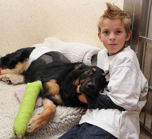 Верный пёс спас мальчика от гибели под колесами грузовика