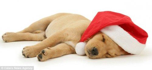 Прелестные рождественские фотографии от Марка Тейлора (11 шт)