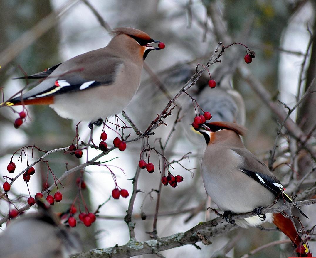 Красивое фото зимнего леса многодетных семей-участников