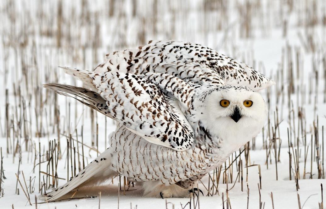 Картинки животные и птицы севера
