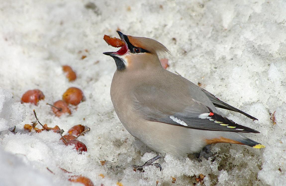 снять иглу птицы зимующие в спб фото давайте узнаем, чем