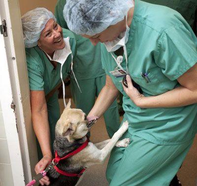 Бесстрашная собака с половиной мордочки победила рак (7 фото+видео)