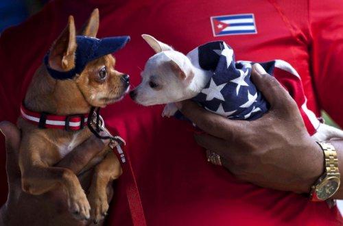 Выставка собак в Гаване (16 фото)