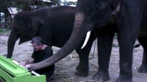 Слону понравилось играть на пианино