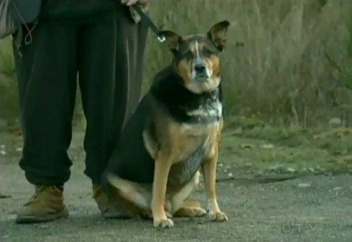 Пёс спас жизнь хозяину - пенсионеру (2 фото+видео)