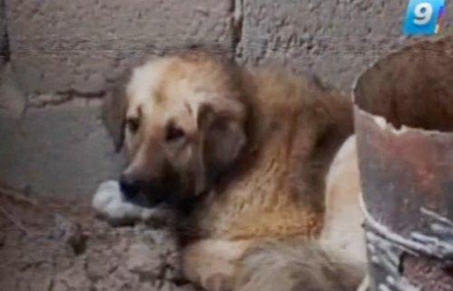 Верный пёс из Крымска 4 месяца ждет погибшую хозяйку