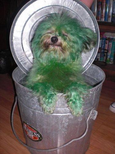 Собаки, что обеспокоены грядущим апокалипсисом (25 фото)