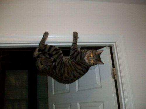 Кошки, что обеспокоены грядущим апокалипсисом (35 фото)