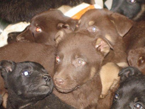 Москвичка спасла 20 щенков, выброшенных у дороги.