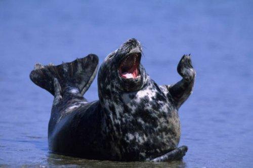 Позитивные тюлени (9 фото)