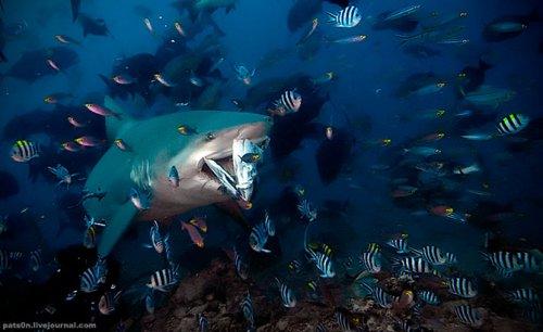 Красивые подводные фотографии Александра Сафонова (32 фото)