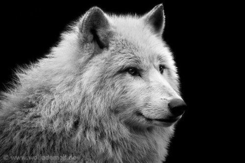 Фотограф-анималист Wolf Ademeit (41 фото)