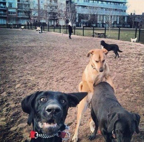 Смешные и забавные собачки (35 фото)