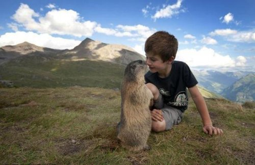Невероятная дружба 8-летнего Маттео и сурков (7 фото)