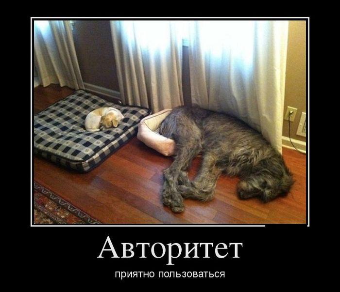 Как сделать так чтобы кот спал по ночам 255