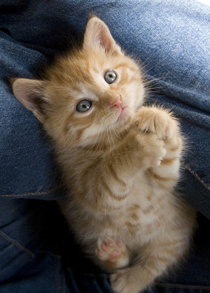 оставшийся покажи картинки кошек пожалуйста дожидается