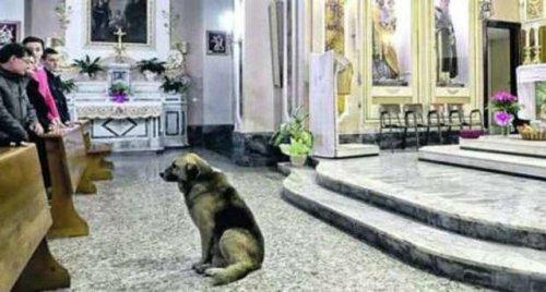 12-летний пес каждый день приходит на мессу в надежде встретить хозяйку (2 фото)