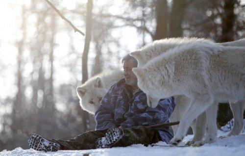 У немца на воспитании находится 29 волков (27 фото)