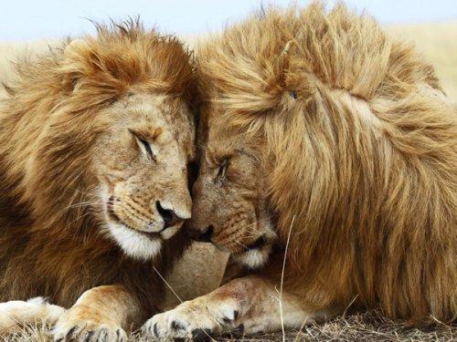 10 Удивительных фактов о сексуальной жизни животных (10 фото)