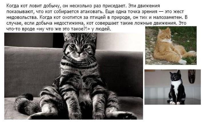 О наших любимцах (25 фото)