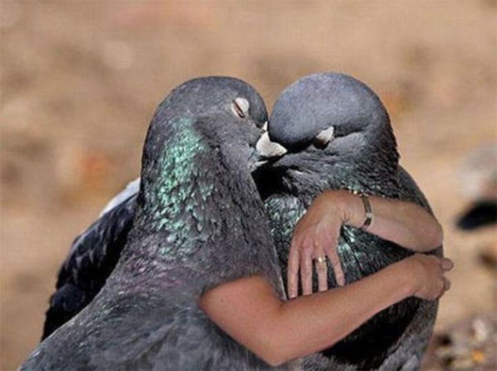 голубь обнимает картинки того