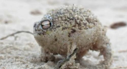 Забавная лягушка