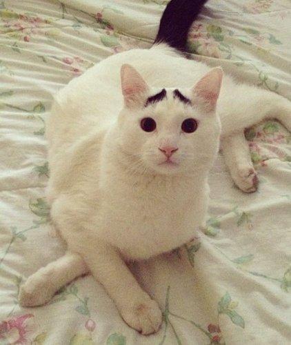 Кот Сэм – очередная звезда интернета (8 фото)
