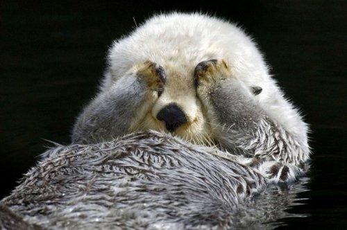 Пробуждение спящей выдры (6 фото)