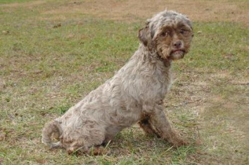 Человеко-пёс (4 фото)