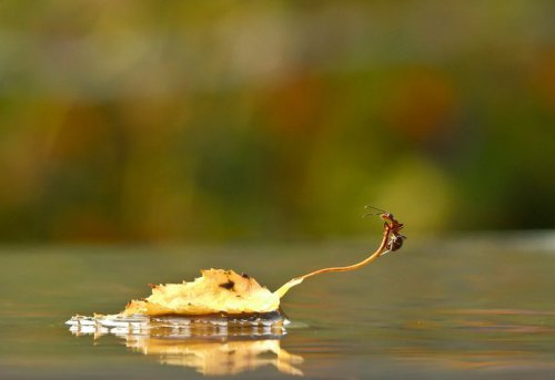 Сказка о муравьях фотографа Вячеслава Мищенко (13 фото)