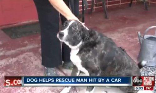 Собака пыталась спасти сбитого машиной хозяина