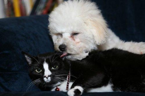 Неожиданные межвидовые отношения среди животных (45 фото)