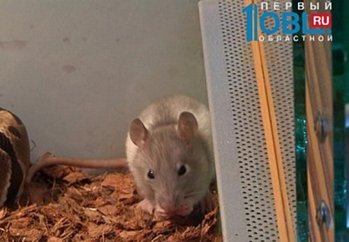 Питон Аватар сдружился с мышкой Нейтири  (3 фото+видео)