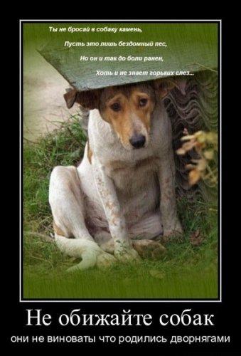 Помоги животным! Они заслуживают дома и жизни!