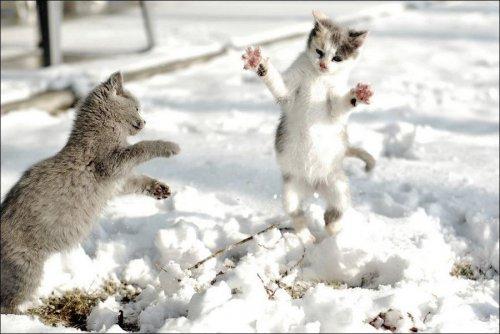 Зимние забавы кошек (32 фото)