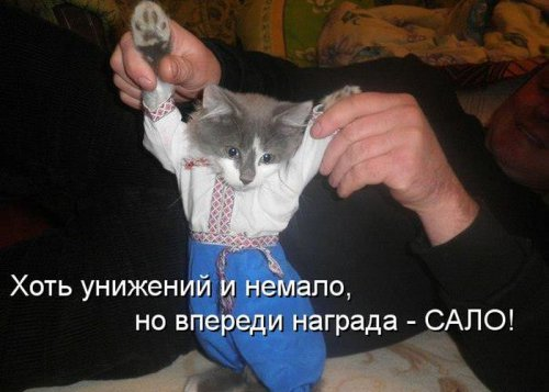 Весёленькая котоматрица (35 фото)