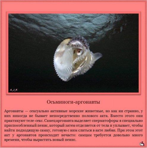 Проявления сексуальности у животных (11 фото)