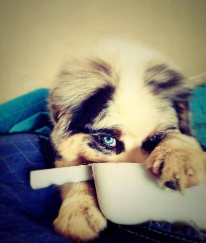 Смешные и милые собаки (55 фото)